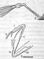 Практична робота №1 - 7 з біології 7 клас {ГДЗ/відповіді} (Задорожний К.М.) [2015]