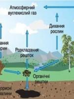 Біохімічні цикли