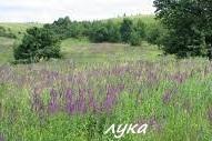 Порівняльна характеристика природних і агроекосистем